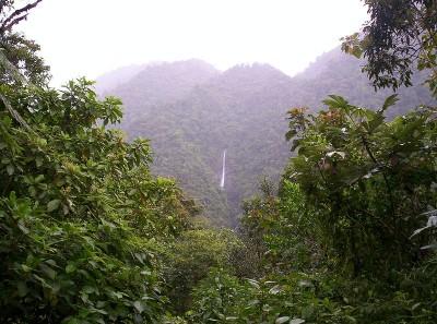 Costa Rica Tapanti